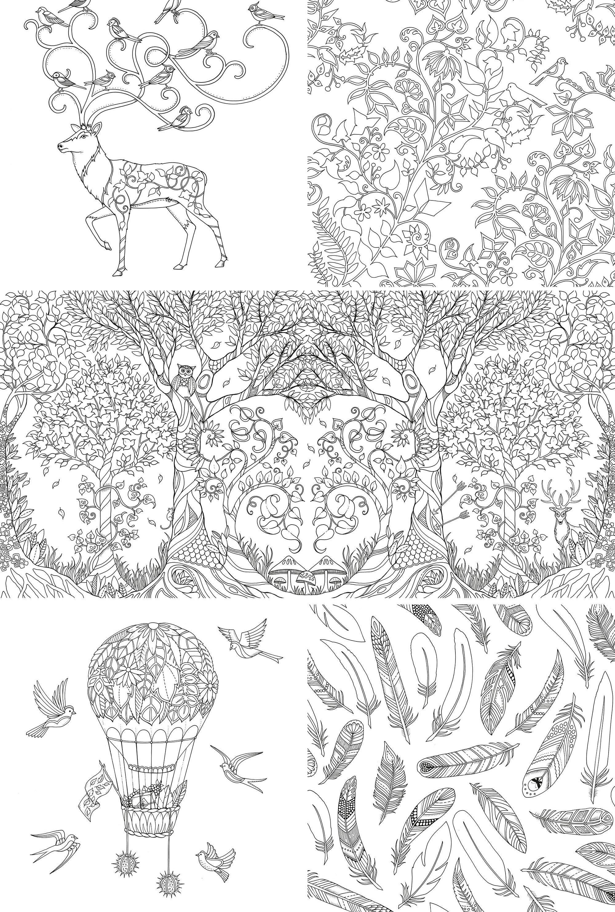 Enchanted forest coloring book website - Enchanted Forest Coloring Book Enchanted Forest Coloring Book